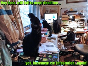 Hey boss, will fail to meet deadline...  yea, basement cat infestation...again!