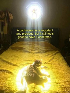 Even The Heavens Acknowledge How Magnifi-Cat I Am!