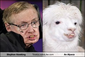 Stephen Hawking Totally Looks Like An Alpaca