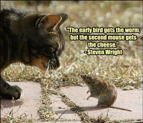 """""""The early bird gets the worm, but the second mouse gets the cheese."""" - Steven Wright"""