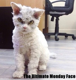 The Ultimate Monday Face