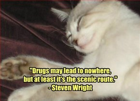 """""""Drugs may lead to nowhere,  but at least it's the scenic route."""" - Steven Wright"""