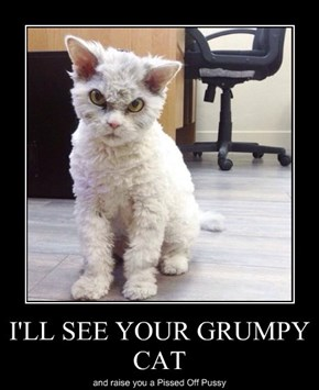 I'LL SEE YOUR GRUMPY CAT