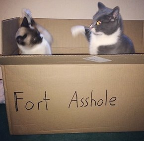 Nothing Like a Cat Fight in the Ol' Fort