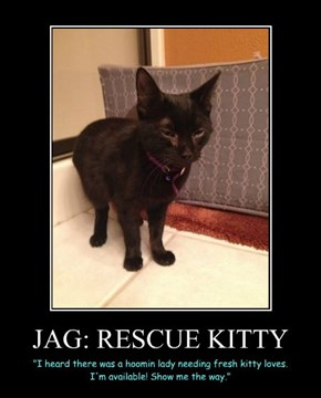 JAG: RESCUE KITTY