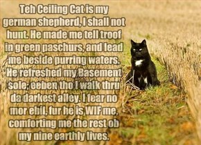 Teh Ceiling Cat is my german shepherd
