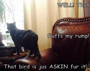 WELL! That fluffs my rump!  That bird is jus ASKIN fur it!