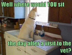 Well where would YOU sit  the day after a visit to the vet?