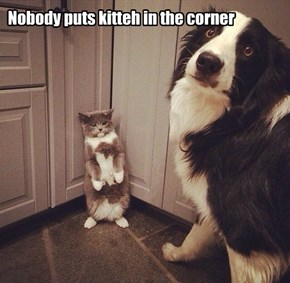 Stupid Dog, You has it coming
