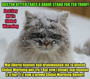 Wiff all the terrible snows and Arctic Cold pummeling the NorthEast for weeks, Boston Mass. Kitteh realizes dat hiz hoomin had lied to him!
