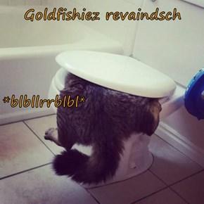 Goldfishiez revaindsch *blbllrrblbl*