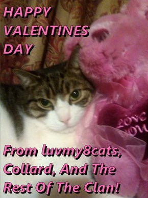 HAPPY        VALENTINES                   DAY  From luvmy8cats, Collard, And The Rest Of The Clan!