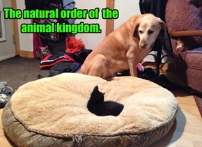 The natural order of  the animal kingdom.