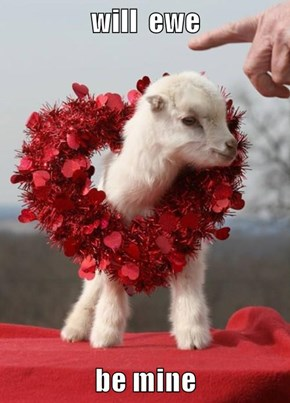will  ewe   be mine