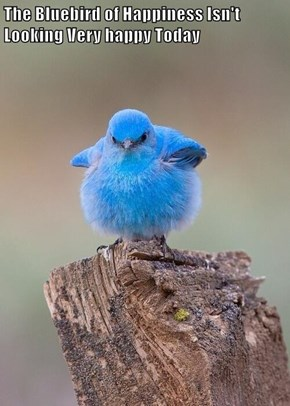 The Bluebird of Happiness Isn't Looking Very happy Today