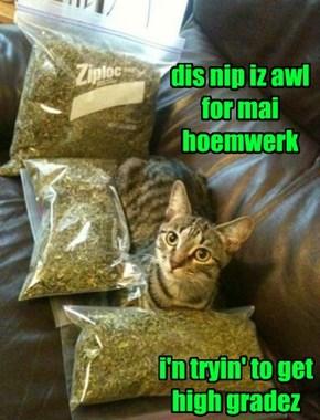 I'n A Cat Wif A Plan
