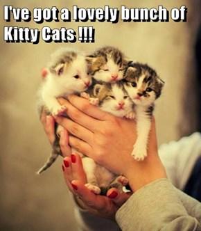 I've got a lovely bunch of Kitty Cats !!!