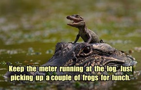 Keep  the  meter  running  at  the  log.  Just  picking  up  a couple  of  frogs  for  lunch.