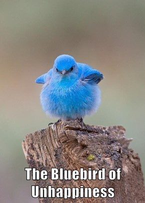 The Bluebird of Unhappiness