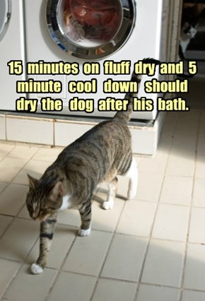 15  minutes  on  fluff  dry  and  5  minute   cool   down   should  dry  the   dog  after  his  bath.