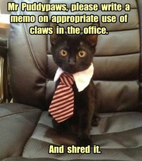 Mr  Puddypaws,  please  write  a  memo  on  appropriate  use  of  claws  in  the  office.