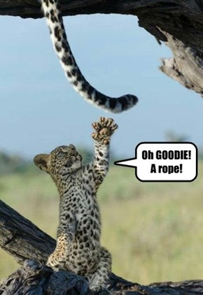 Oh GOODIE! A rope!