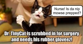 Dr. TinyCat the surgeon!