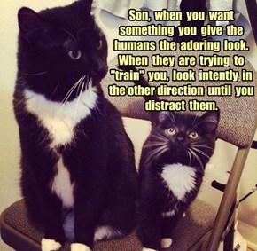 Cat home schooling.