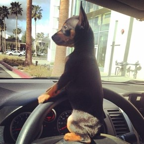 Quick Puppy Take the Wheel!