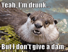 Yeah, I'm drunk...  But I don't give a dam