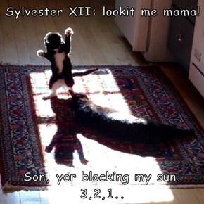Sylvester XII: lookit me mama!   Son, yor blocking my sun. 3,2,1..