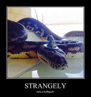 The Friendliest Snake