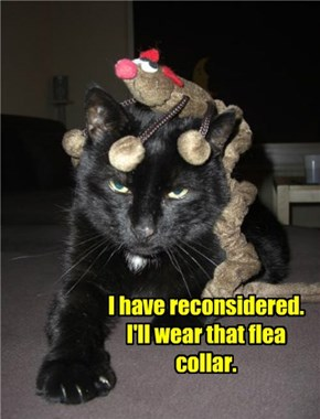 I have reconsidered. I'll wear that flea collar.