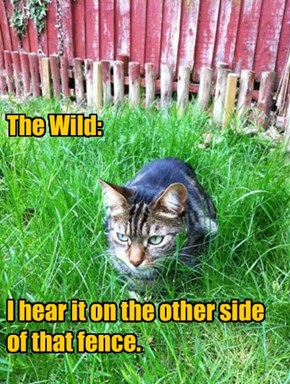 The Wild:       I hear it on the other side of that fence.