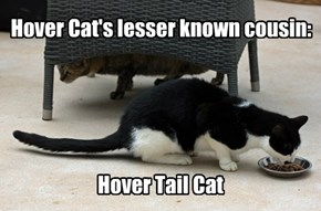 Hover Cat's Lesser Known Cousin