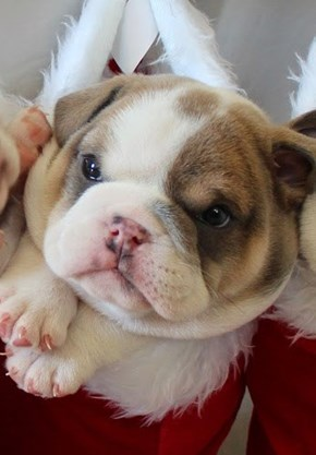 Equal Parts Wrinkles and Adorable
