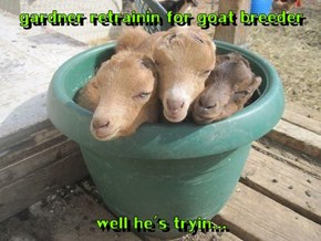 Be Sure to Water and Snuggle Your Goats Every Day