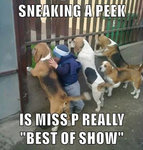 "SNEAKING A PEEK   IS MISS P REALLY ""BEST OF SHOW"""