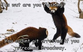Jus wut are you flashing?   You cudint git arrested if you streaked Broadway.