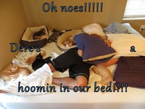 Oh noes!!!!! Dere's                            a hoomin in our bed!!!!