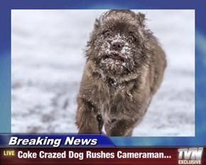 Breaking News - Coke Crazed Dog Rushes Cameraman...