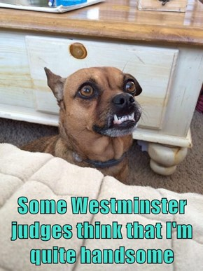 Some Westminster judges think that I'm quite handsome