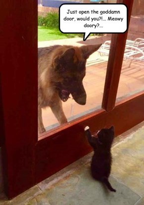 Kitty Talk