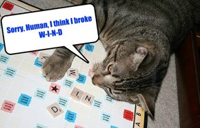 Sorry, Human, I think I broke W-I-N-D