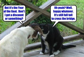 Goat, Billy's Gruff!