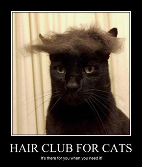 HAIR CLUB FOR CATS