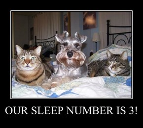 OUR SLEEP NUMBER IS 3!