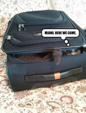 MIAMI, HERE WE COME.