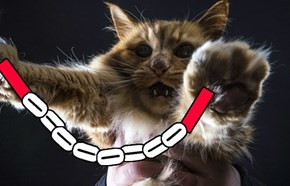 When a cat brings nunchucks to a fight, quit while you still have a chance.