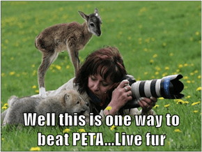 Well this is one way to                      beat PETA...Live fur